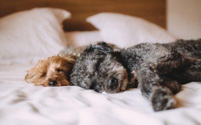 De voordelen van slapen met je hond